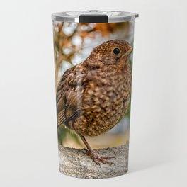 Juvenile Blackbird Resting Travel Mug
