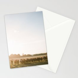 Curious Florida Cattle at Sunset / Florida Fine Art Film Photography Stationery Cards