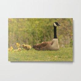 Canada Goose Family Metal Print