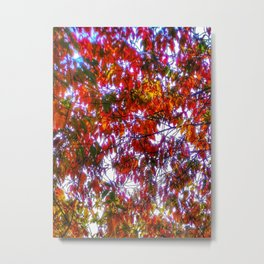 Bright colored fall foliage Metal Print