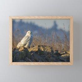 Snowy Owl Perching on the Eastside of a Bern Framed Mini Art Print