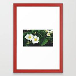 Strawberry Blossom Framed Art Print