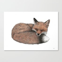 Aurelia's Red Fox Canvas Print