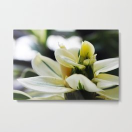 Blooming White Metal Print