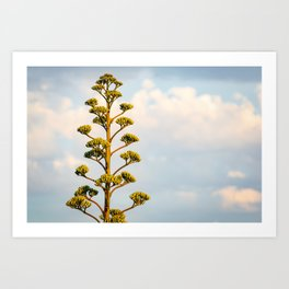Agave Parry and Blue Sky Art Print