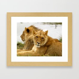 The Lioness Framed Art Print