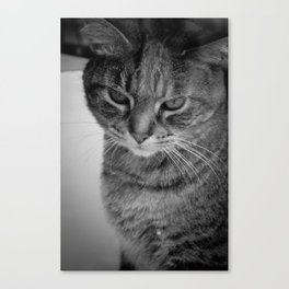 What's up, Doc? Canvas Print