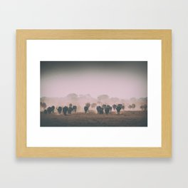 African buffalos Framed Art Print