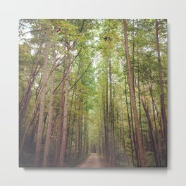 Let's Take A Walk Metal Print