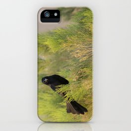 Great-tailed Grackle (Quiscalus mexicanus) perches in a Coyote Bush (Baccharis Pilularis) at sunrise iPhone Case
