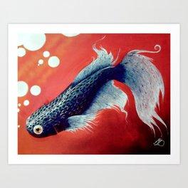 Jaws the Betta Fish 2 Art Print