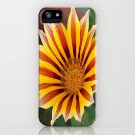 Single Flower Close Up Gazania Red Stripe iPhone Case