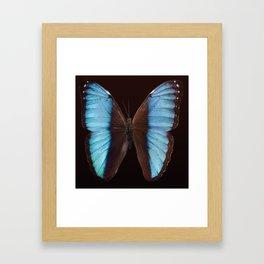 Butterfly exotic Framed Art Print