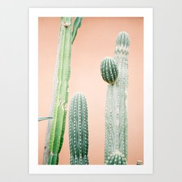 Botanical photo of green cactuses in Morocco | pastel orange background | Fine art film photography Art Print