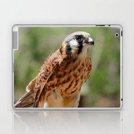 American Kestrel Falcon Bird Wildlife Photograph Laptop & iPad Skin