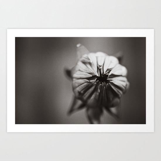 Ready to Bloom Art Print