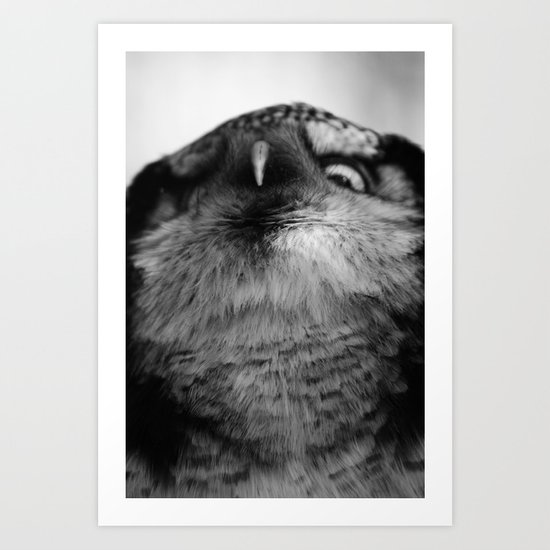 Owl series no.5 Art Print