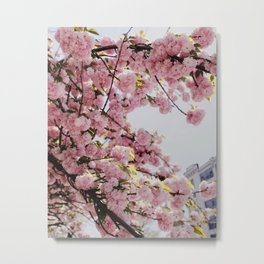 Pink Blossoms against the Spring Sky Metal Print