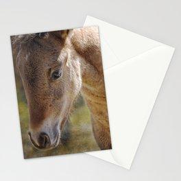 Sweet Shy Odakota Stationery Cards