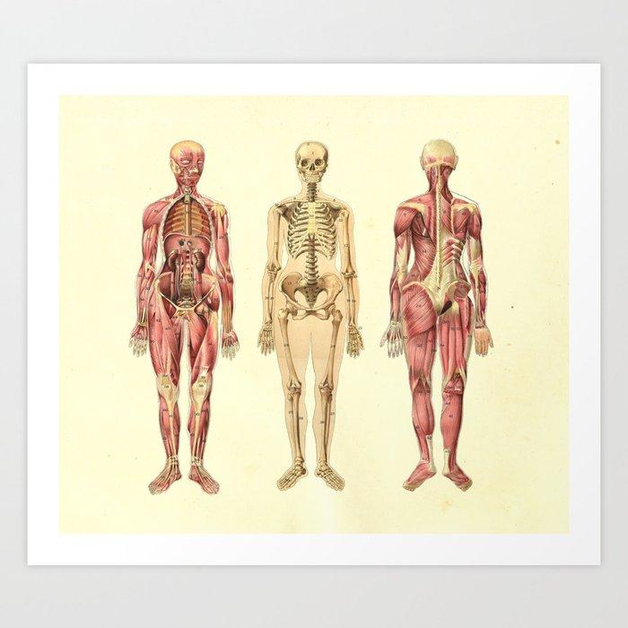 Human Female Anatomy Print Art Print by aburnski   Society6
