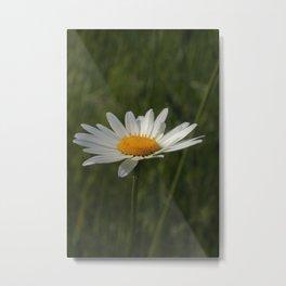 Kamille Metal Print
