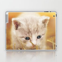 Kitten   Chaton Laptop & iPad Skin