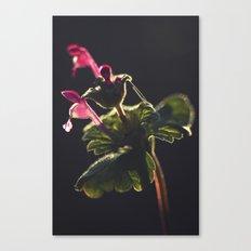 Botanical Life Canvas Print