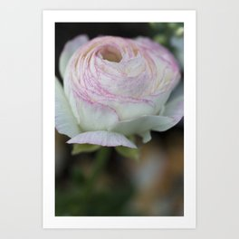 Soft pink flower Art Print