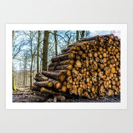 Poltery Site (Wood Storage Area) After Storm Victoria Möhne Forest 3 Art Print