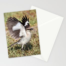 Wing Flash Stationery Cards