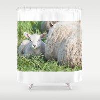 lamb Shower Curtains featuring lamb by Marcel Derweduwen
