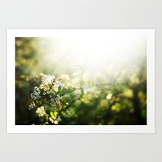 summer light  Art Print