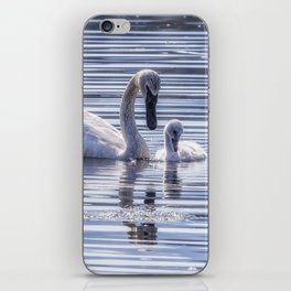 Cygnet with Mother iPhone Skin