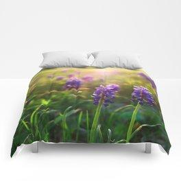 Grape Hyacinths (Muscari) Comforters