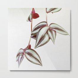 Trailing Leaves Metal Print