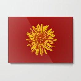 Dandelion 4 Metal Print