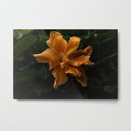 Malvaceae Orange Hibiscus Bush Metal Print