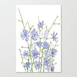 blue chicory watercolor Canvas Print