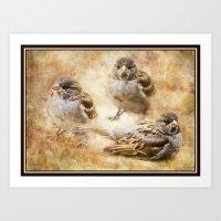 sparrow Art Prints featuring Sparrow by Kimberley Britt