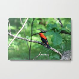 Bird on a perch Metal Print