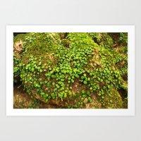 Moss is slow life Art Print