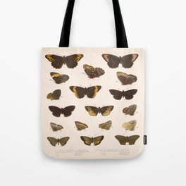 Vintage Scientific Hand Drawn Illustration Anatomy Of Butterfly Insect Patterns Biology Art Tote Bag