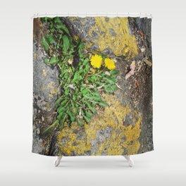 Floreecilla de banqueta Shower Curtain