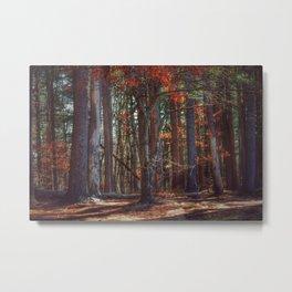 woods alight  Metal Print