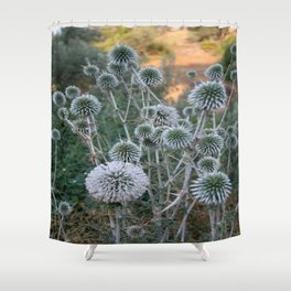 Seed Head Of Leek Flower Allium Sphaerocephalon  Shower Curtain