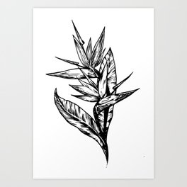 strelitzia Art Print