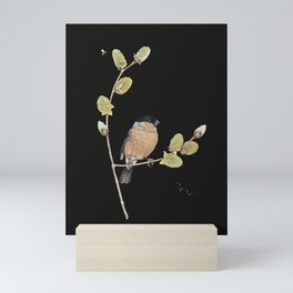 Bullfinch on willow Mini Art Print