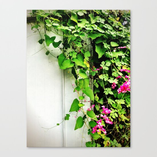 Vines on a Shed Canvas Print