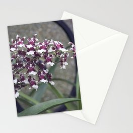Longwood Gardens Autumn Series 247 Stationery Cards