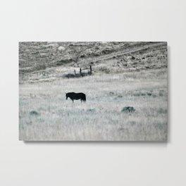Horse in high desert grass Metal Print